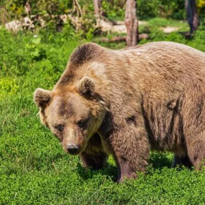 Surviving A Bear Market: How to Keep Investing In A Rough Economy